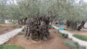 Garden of Gethsamane